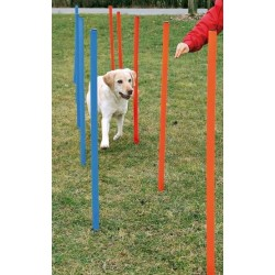 Dog-Activity Agility-Slalom
