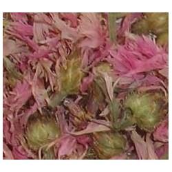 Kornblumenblüten, rosa