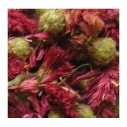 Kornblumenblüten, rot
