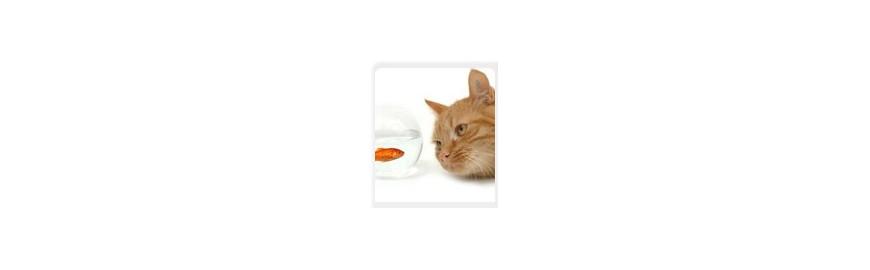 Natürliches Katzenfutter & Leckerlies