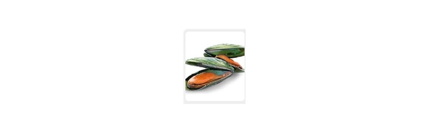 Grünlippige Zuchtmuschel